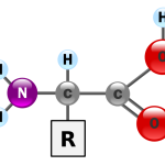 Aminoácido - estrutura geral